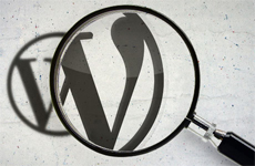 wordpress поиск